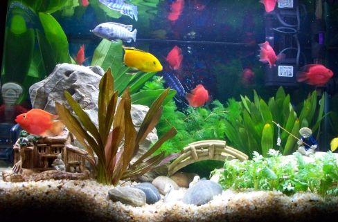 养鱼须知:硝化循环水养殖系统